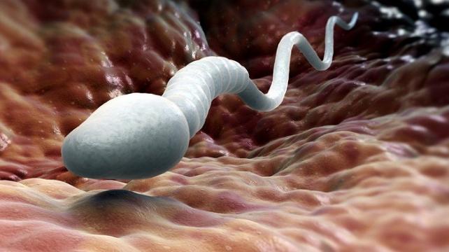 ТОП-7 невероятных и удивительных фактов о сперме | Медицинский центр Active Medical